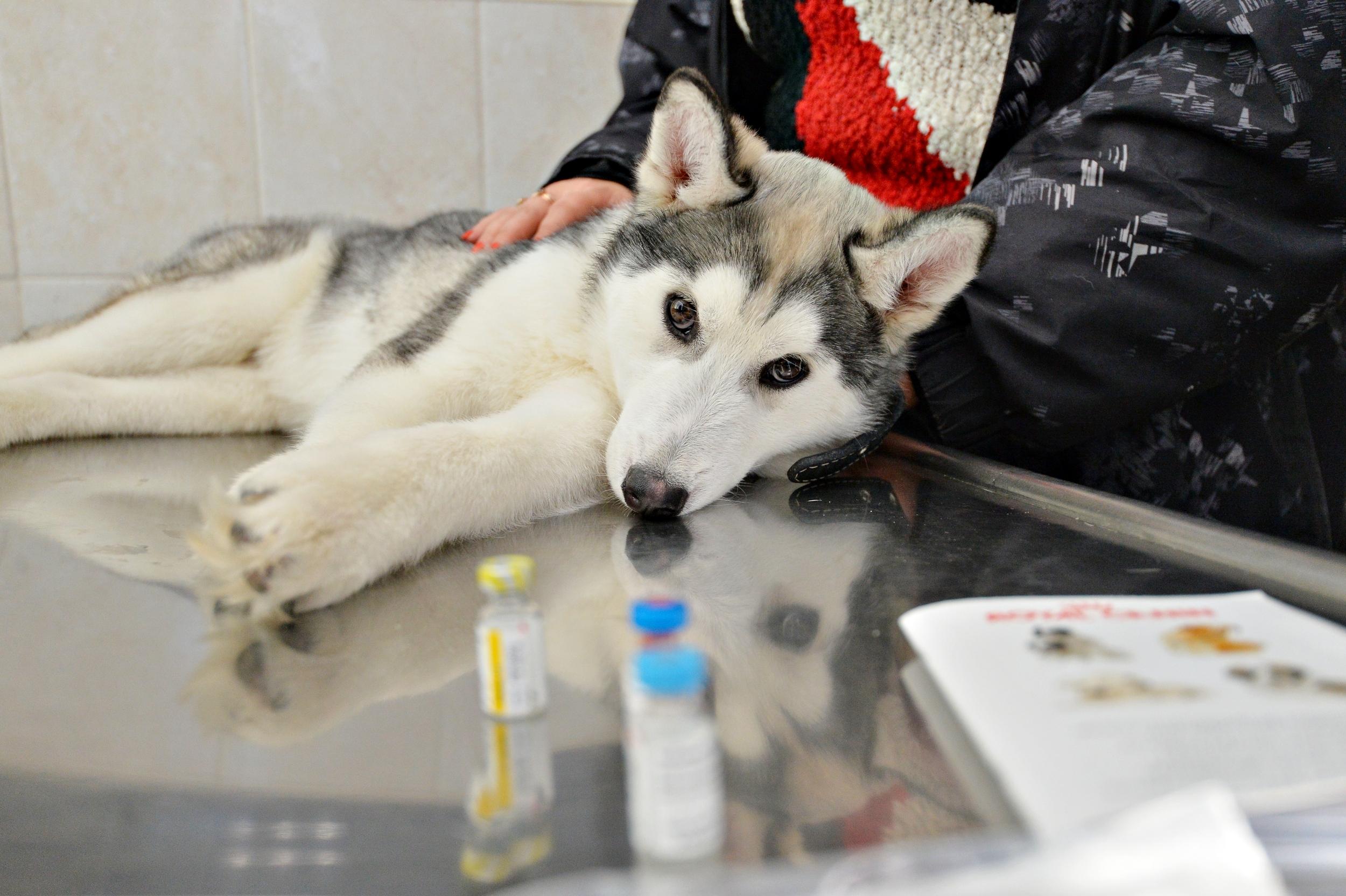 В Челябинской ветстанции осваивают высокие технологии в диагностике и лечении животных