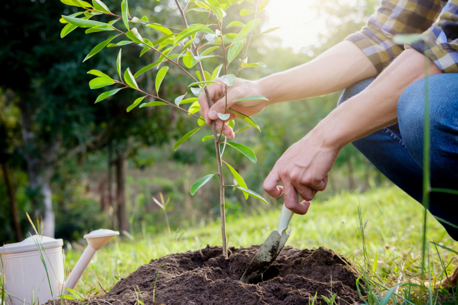 Экокоманда кадастра высадила дубы, березы, ясени, ивы, липы, туи, яблони, ели, сосны, рябины, сирени, спиреи